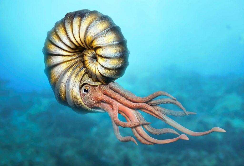 ammonites tethys